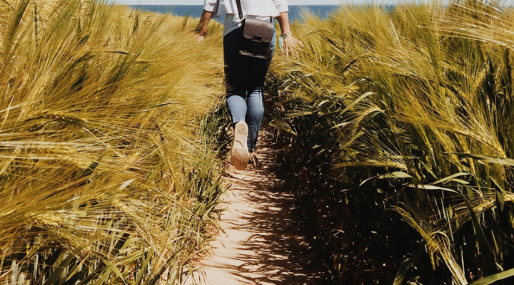 Walking in a Wheat Field